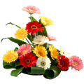 Flowers to Goa, New Year Flowers to Goa