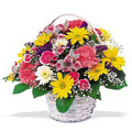Send Flowers to Goa, Flowers to Goa