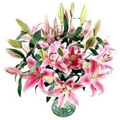 Send Flowers to Goa : Valentines Day Flowers to Goa